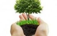 Padėkok Žemei - pasodink medelį