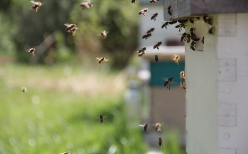 Paramos lėšos jau atkeliavo pas bitininkus