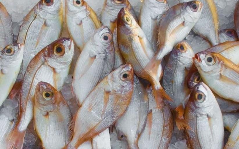 Žuvininkai gali kreiptis paramos žuvų pridėtinei vertei ar kokybei pagerinti