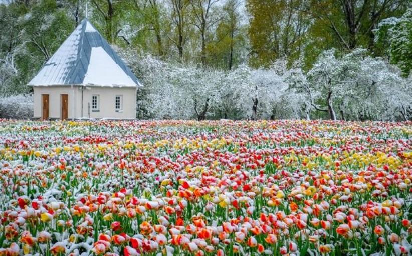 Šiaulių kraštas skęsta gėlių žieduose: 6 vietos nepakartojamoms fotosesijoms
