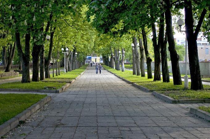 Kviečia pasirašyti peticiją dėl kaštonų alėjos ir senųjų medžių Išsaugojimo Šiauliuose