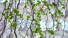 Linos Pčelincevaitės nuotr.Šiauliai (1)