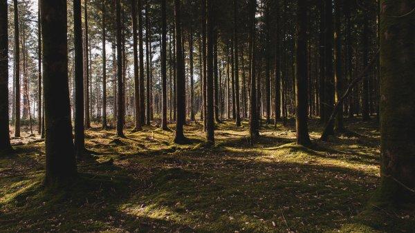 Dar vienas žingsnis dėl Girulių miško išsaugojimo